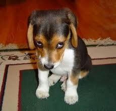 puppydog looks