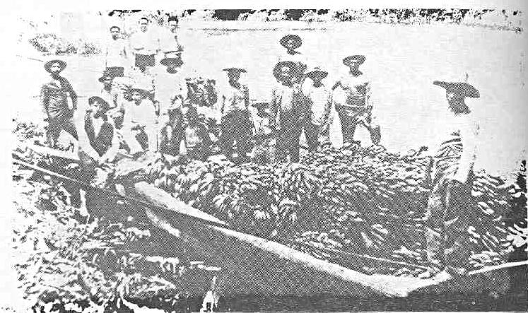 Transporting Bananas on Rio Conjega - 1900