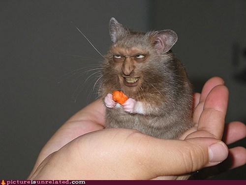 evil hamster miscavige