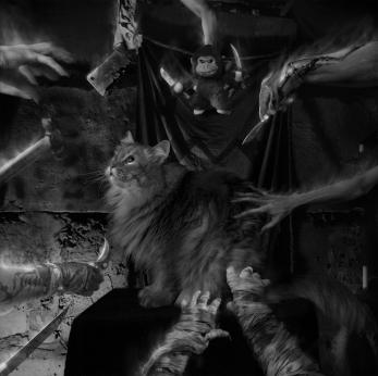 kitty cat sees demons